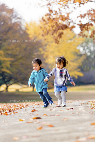 秋の公園を走る男の子と女の子の素材 [FYI01075116]