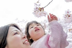 春の公園で桜を見る母と娘の素材 [FYI01075126]