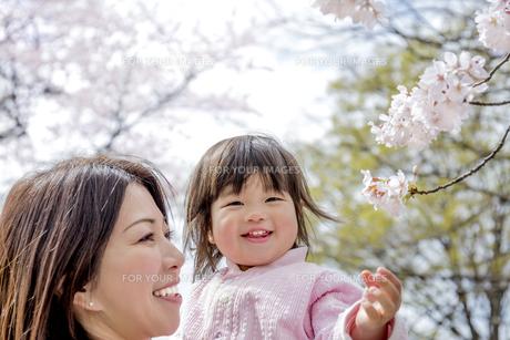 春の公園で桜を見る母と娘の素材 [FYI01075129]