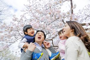 桜の咲く公園で談笑する4人家族の素材 [FYI01075134]