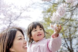 春の公園で桜を見る母と娘の素材 [FYI01075144]