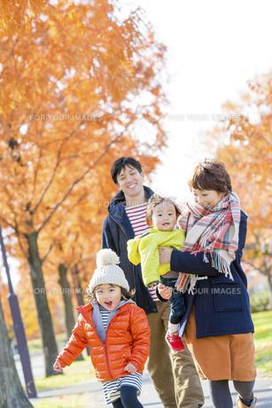 秋の公園を歩く4人家族の素材 [FYI01075146]