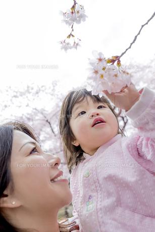 春の公園で桜を見る母と娘の素材 [FYI01075168]