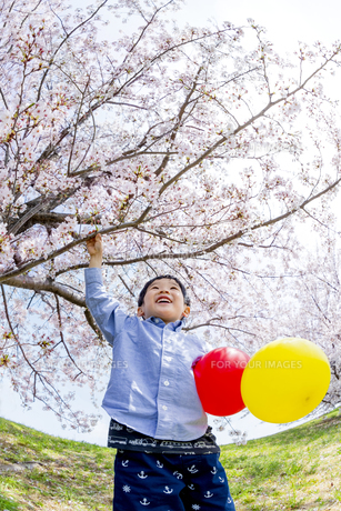 桜の咲く土手で遊ぶ男の子の素材 [FYI01075175]
