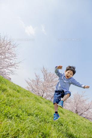 桜の咲く土手で遊ぶ男の子の素材 [FYI01075183]