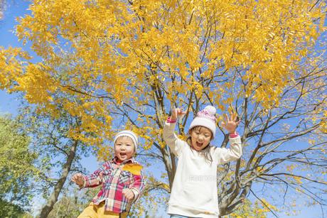 秋の公園で落葉を投げる姉と弟の素材 [FYI01075197]