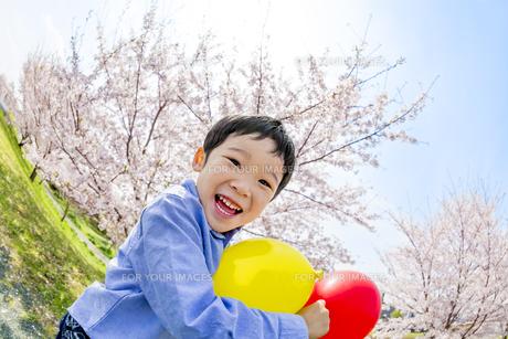 桜の咲く土手で遊ぶ男の子の素材 [FYI01075200]