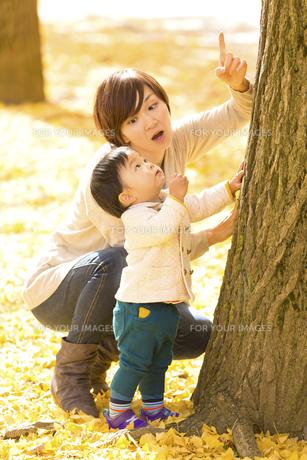 秋の公園で遊ぶ息子と母親の素材 [FYI01075209]