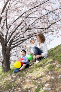 桜の咲く土手で遊ぶ親子の素材 [FYI01075213]