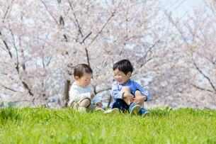 桜の咲く土手で遊ぶ兄と弟の素材 [FYI01075214]