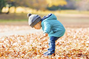 秋の公園で遊ぶ男の子と女の子の素材 [FYI01075221]