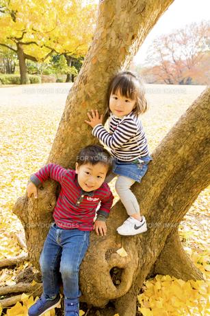 秋の公園で遊ぶ男の子と女の子の素材 [FYI01075225]