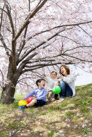 桜の咲く土手で遊ぶ親子の素材 [FYI01075230]