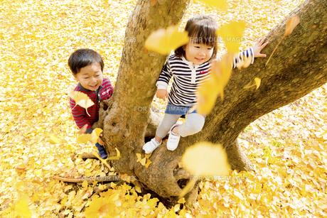 秋の公園で遊ぶ男の子と女の子の素材 [FYI01075232]