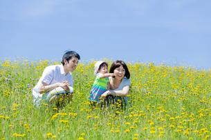野花の咲く丘で遊ぶ親子の素材 [FYI01075233]