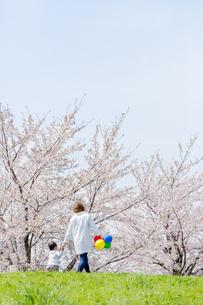 桜の咲く土手を歩く母と息子の後ろ姿の素材 [FYI01075234]