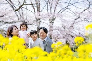 桜と菜の花の咲く公園で談笑する4人家族の素材 [FYI01075246]