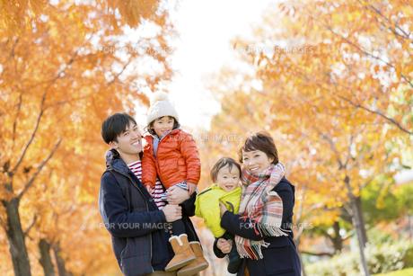 秋の公園を歩く4人家族の素材 [FYI01075257]
