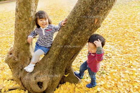 秋の公園で遊ぶ男の子と女の子の素材 [FYI01075261]