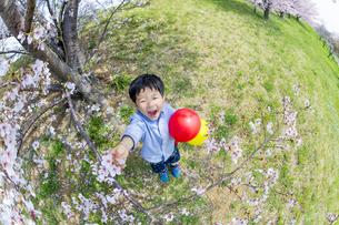 桜の咲く土手で遊ぶ男の子の素材 [FYI01075267]