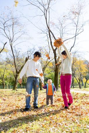 秋の公園で落葉で遊ぶ親子の素材 [FYI01075281]