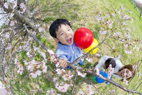 桜の咲く土手で遊ぶ親子の素材 [FYI01075300]