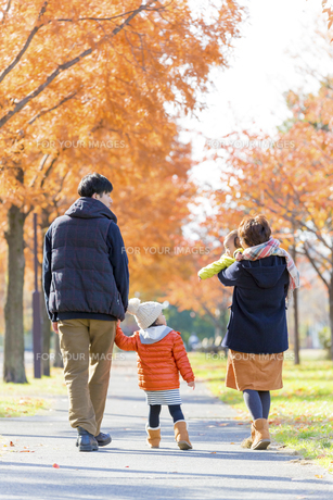 秋の公園を歩く4人家族の後ろ姿の素材 [FYI01075318]