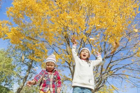 秋の公園で落葉を投げる姉と弟の素材 [FYI01075333]