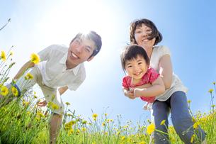 野花の咲く丘で遊ぶ親子の素材 [FYI01075351]