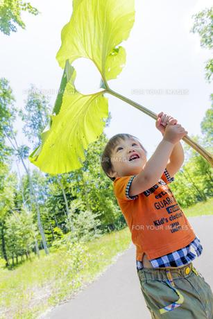 公園で大きなフキを傘がわりにする男の子の素材 [FYI01075353]