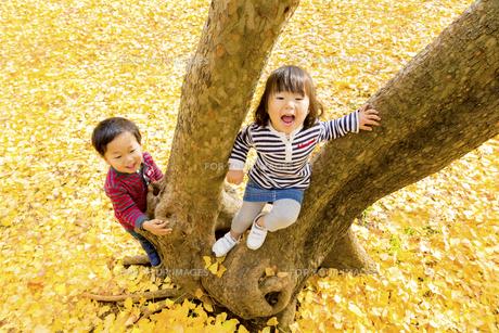 秋の公園で遊ぶ男の子と女の子の素材 [FYI01075390]