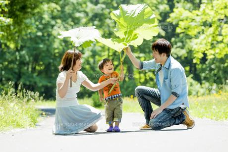 公園で大きなフキの葉で遊ぶ息子と両親の素材 [FYI01075397]