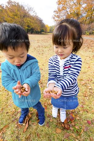秋の公園でどんぐりを持つ男の子と女の子の素材 [FYI01075405]