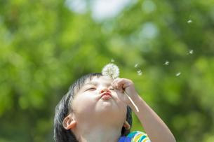 公園でタンポポの綿毛を吹く男の子の素材 [FYI01075438]