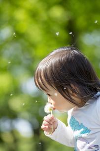 公園でタンポポの綿毛を吹く女の子の素材 [FYI01075461]