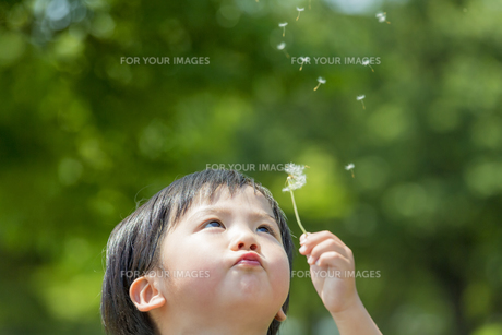 公園でタンポポの綿毛を吹く男の子の素材 [FYI01075486]