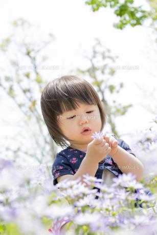 公園で花を見る女の子の素材 [FYI01075509]