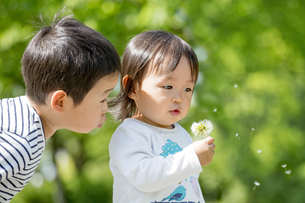 公園でタンポポの綿毛を吹いて遊ぶ兄と妹の素材 [FYI01075546]