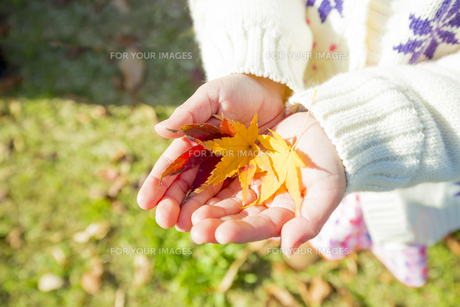 紅葉の公園でモミジの葉っぱを持つ女の子の素材 [FYI01075549]