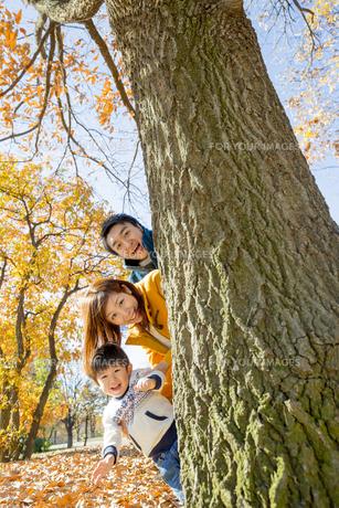 紅葉の公園で遊ぶ息子と両親の素材 [FYI01075554]