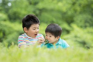 新緑の公園でおにぎりを食べる兄弟の素材 [FYI01075599]