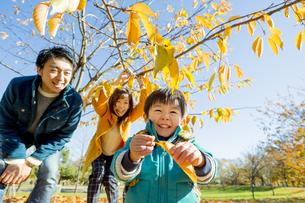 紅葉の公園で遊ぶ息子と両親の素材 [FYI01075608]