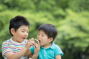 新緑の公園でおにぎりを食べる兄弟の素材 [FYI01075612]