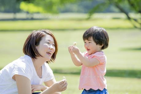 新緑の公園で花を見る母親と娘の素材 [FYI01075711]