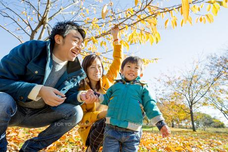 紅葉の公園で遊ぶ息子と両親の素材 [FYI01075724]