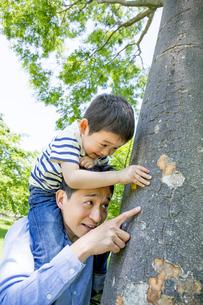 公園で息子を肩車して木を指差す父親の素材 [FYI01075738]