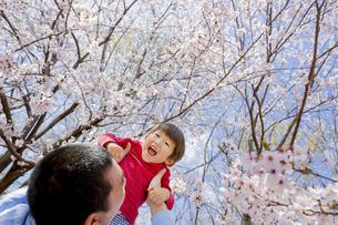 桜の咲く公園で父親に抱き上げられる息子の素材 [FYI01075749]