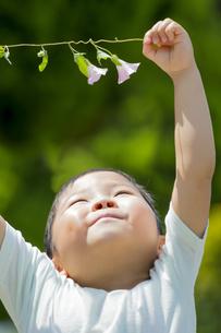 初夏の公園でヒルガオを持つ男の子の素材 [FYI01075750]