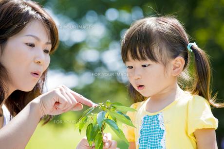 公園でドングリを見る母親と娘の素材 [FYI01075773]