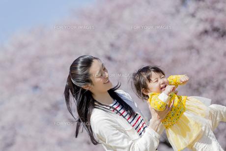 桜の咲く公園で遊ぶ母親と娘の素材 [FYI01075782]